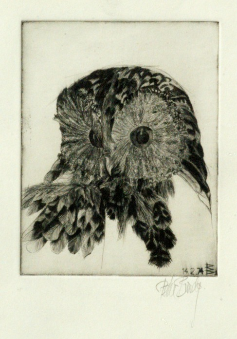 tawny owl - EDITION SOLD